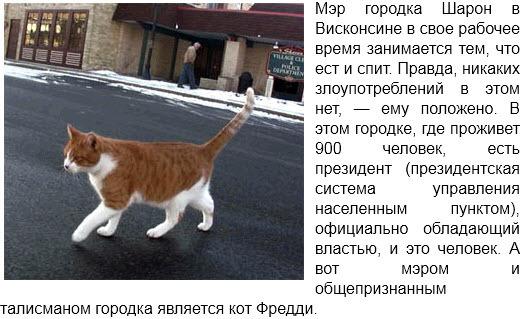 отчего я не котэ :)